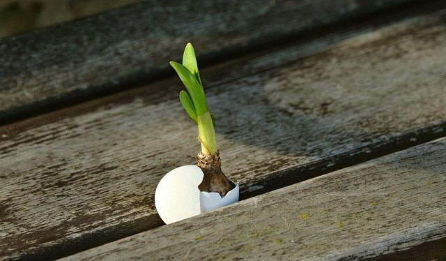 Osamostatněte se vprodukci rostlinné potravy