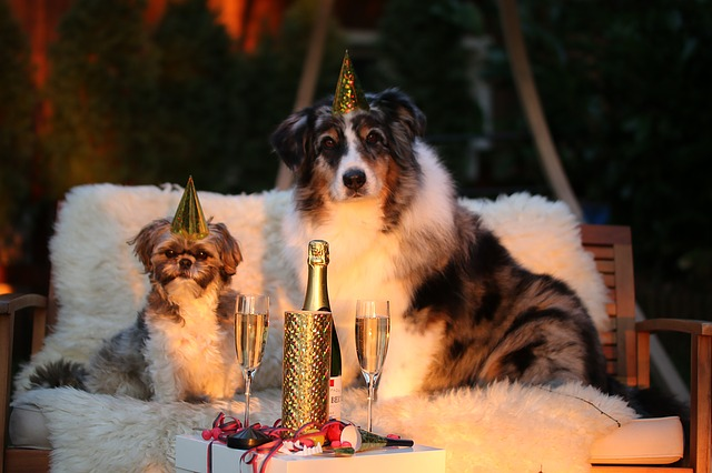 psí oslava